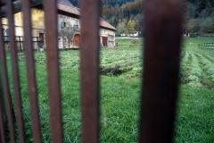Feld mit Thujonpflanzen hinter Gittern in der Nähe von Boveresse fuer die Herstellung von Absinth.
